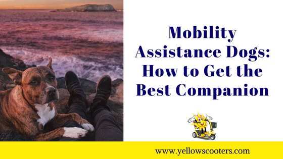 Mobility Assistance Dogs: How to Get the Best Companion Featured Image