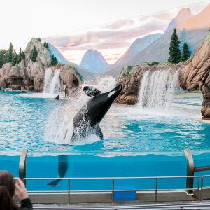 best Sea World attractions