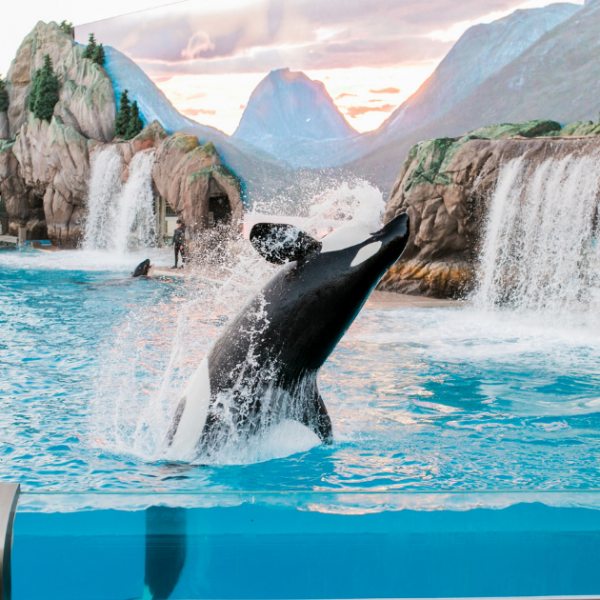 The Top Attractions You Can't Miss at SeaWorld Orlando Featured Image